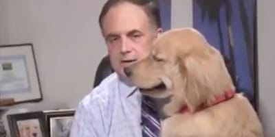 golden retriever standing in front of weatherman