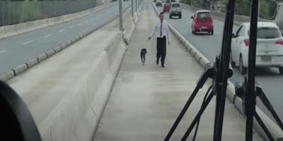 perro rescate brasil