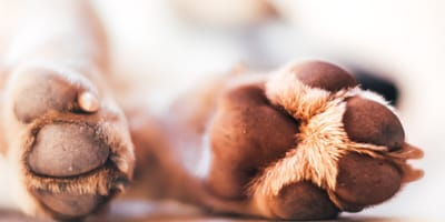 How do you protect your dog's paws in the summer?
