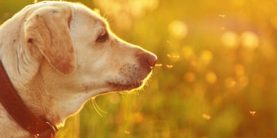 How do you keep your dog safe from mosquitoes in summer?
