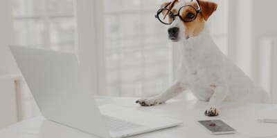 My Family Vets: How to book a vet appointment online