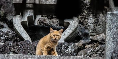 ginger cat sitting on concrete