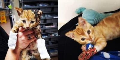 Ginger kitten rescued from fire
