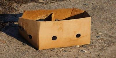 Eine Pappbox wird einfach abgelegt.