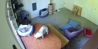 Katzenmama filmt ihr Kätzchen und versteht, dass sie ein MONSTER zuhause hat!
