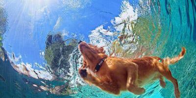 cane che nuota a mare