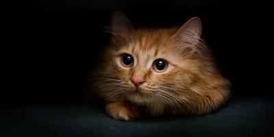 ¿Los gatos se asustan con los temblores? Así es como lo vive tu minino