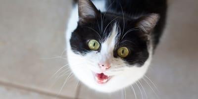 Bezdomna kotka pojawiła się na progu przeraźliwie miaucząc. Okazało się, że miała ważny powód