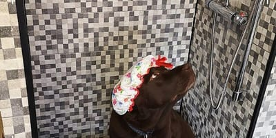 Brown dog sits in mini shower