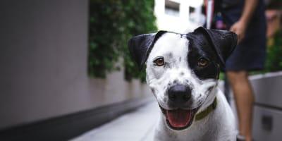 cane in primo piano