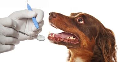 Jak dbać o zęby swojego psa?