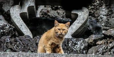 tajemnicza-śmierć-kota