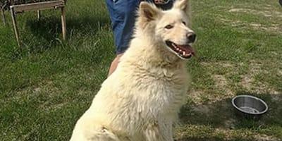 Pies Kokos uratowany z Radysów