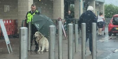 security guard sheltering golden retriever from rain with black umbrella