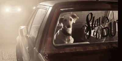 cane triste  in auto