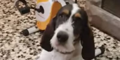 Ten pies znalazł genialny sposób, aby w końcu skutecznie się podrapać (VIDEO)