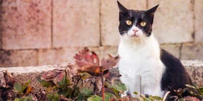 gatto bianco e nero su foglie