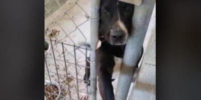 cane nero in rifugio dà la zampa ad una persona