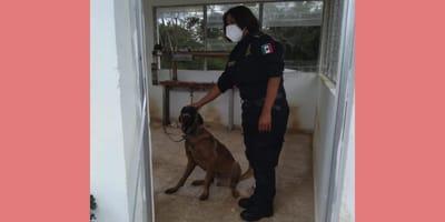 policía perro rescate