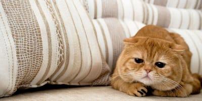 Niska temperatura u kota - czy to powód do niepokoju?