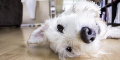 Quali detersivi usare per pulire casa quando si ha un cane o un gatto?