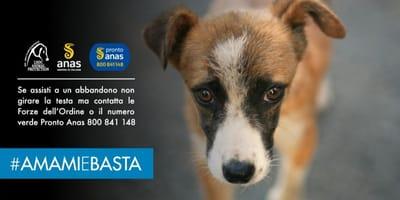 #AMAMIeBASTA: la campagna Anas contro l'abbandono degli animali
