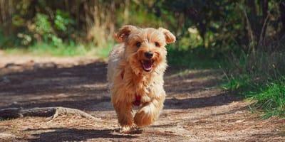 Progetto di Legge per gli animali: un'iniziativa da cui prendere esempio