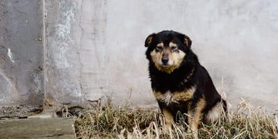In India arriva il divieto di mangiare i cani, ma qualcuno non ci sta