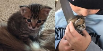 Watch: 10-year-old boy is the only one able to stop rescue kitten's crying