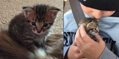 Tiny rescue kitten