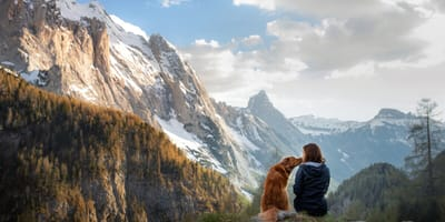 Keep your dog safe when hiking: protect them from ticks, injuries and overheating