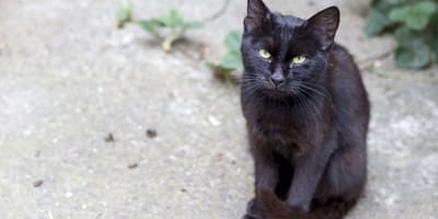 Black cat shows up at woman's door: What happens next leaves her stunned