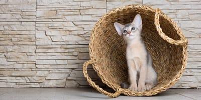 Zehn Tipps: Katzenhotels und Katzensitter in München