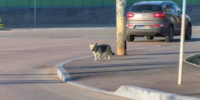 perro abandonado en la carretera