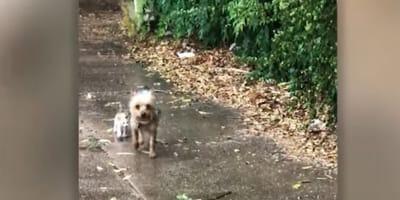 Hund und Katze nebeneinander im Regen
