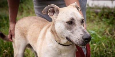 perro adoptado con mirada triste devuelto protecotra orense