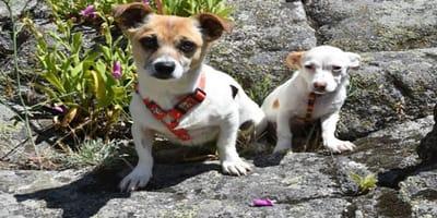 adopcion ellie alex perros vagaron solos cuarentena el refugio madrid