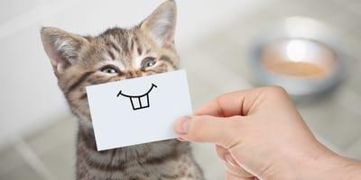 Oryginalne imię dla kota - oto nasze podpowiedzi