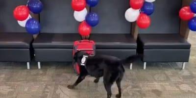cane nero annusa valigia vicino un divano