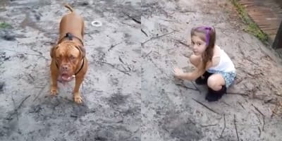 french mastiff standing next to little girl