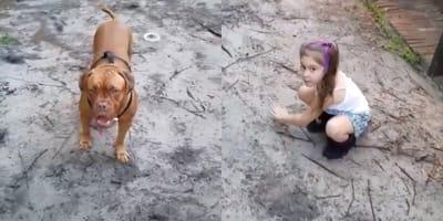 Dogo de Burdeos protege a su mejor amiga, una niña, en un vídeo que pone el vello de punta