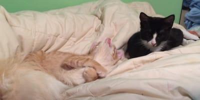 gato agarrado a la cola de perro