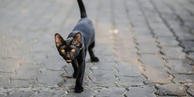 Warszawska Praga: Gdyby nie ten czarny kot, straż miejska  nie złapałaby wandala