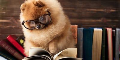 cane-legge-libro