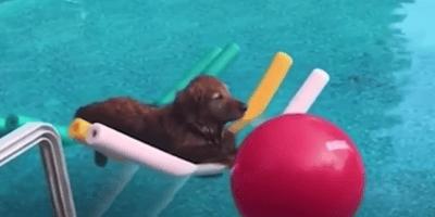 Cane-galleggia-in-piscina
