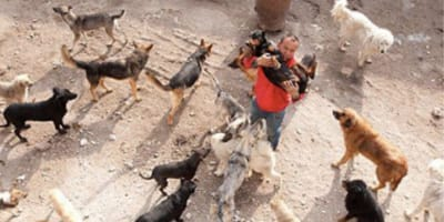 Millionaire spends entire fortune on saving dogs from meat trade