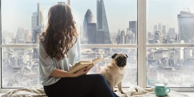 Top 5 of the best dog breeds for apartment living