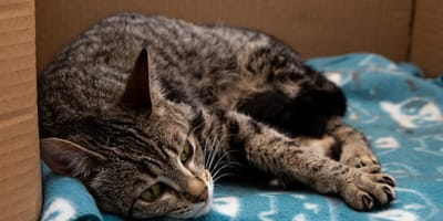 A complete guide to cat births (and how you can help)