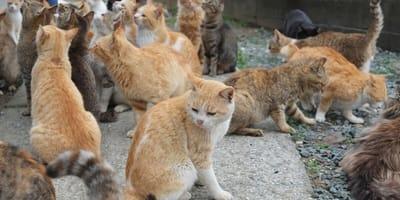 isla de los gatos