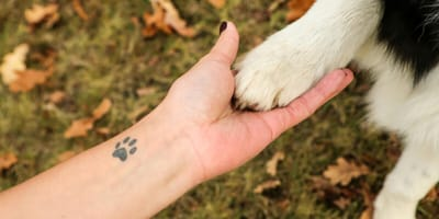 Owner with paw tattoo holding dog paw
